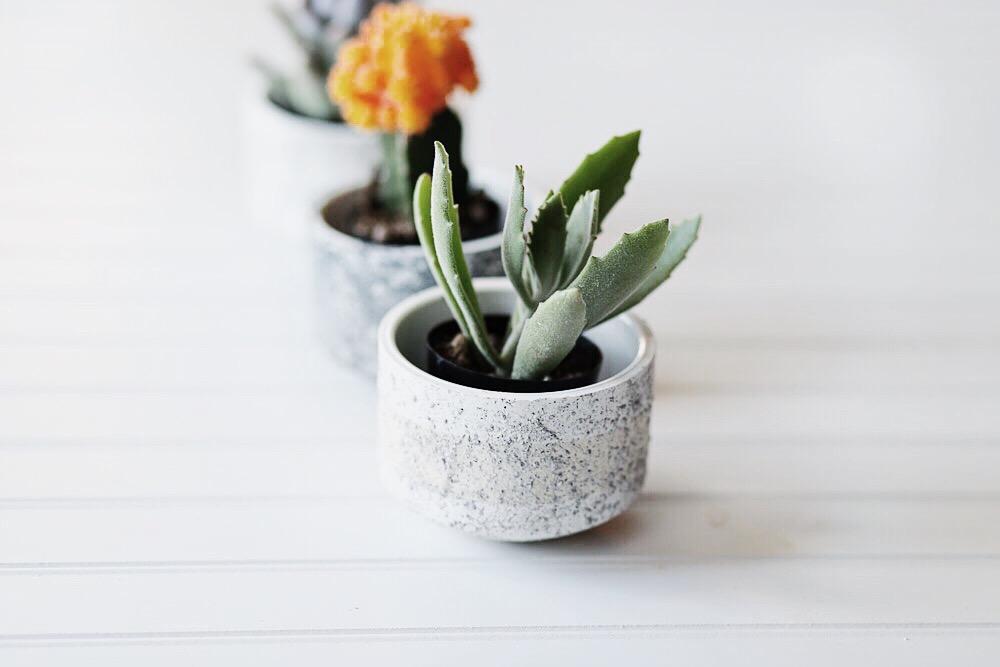Diy mini granite pots missblizzers diy mini granite pots solutioingenieria Images